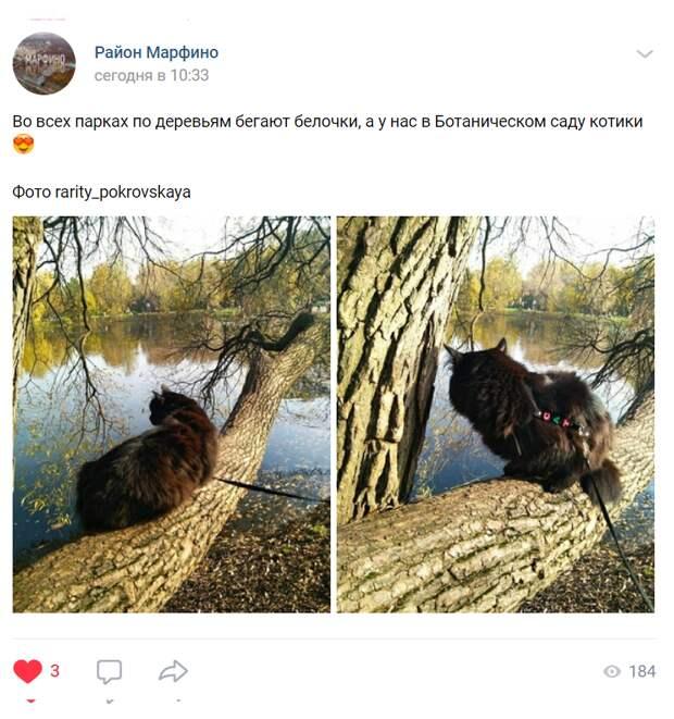 Кот из Главного ботанического сада прикинулся белкой