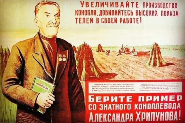 РАН предложила выращивать конопляные поля, чтобы улучшить экологию и экономику страны