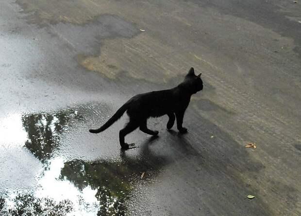 Если чёрная кошка перешла вам дорогу, то обязательно нужно было подержаться за что-то чёрное
