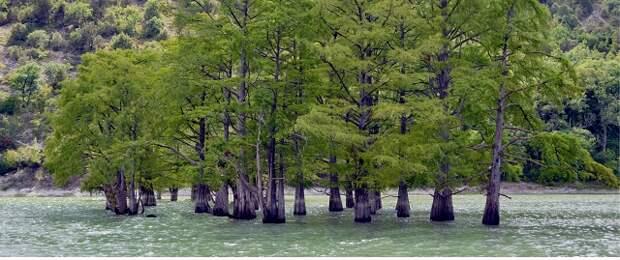 На Кубани создали 358 особо охраняемых территорий