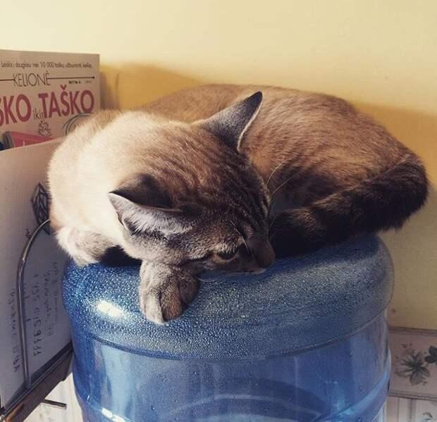 кот спит на пластиковом бутыле