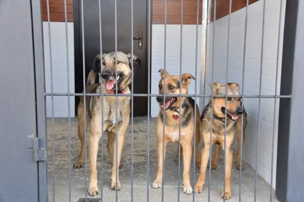 Видео: собаки приюта Останкинского района переехали в новые вольеры