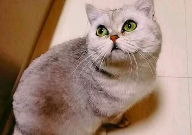 Кошка из Уханя 40 дней жила одна в квартире. И ей было офигенно