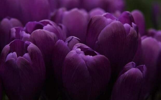hq-wallpapers_ru_flowers_51559_1920x1200 (700x437, 20Kb)