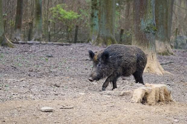 Сезон охоты начнется в Удмуртии с 1 июня