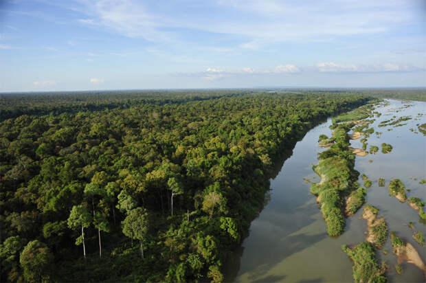 8 реликтовых лесов мира, которые скоро исчезнут
