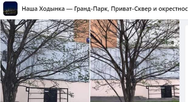 В Хорошевке спилили сломанные ветки — управа