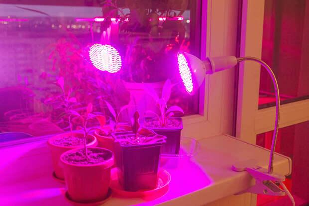 как подсвечивать рассаду фитолампой