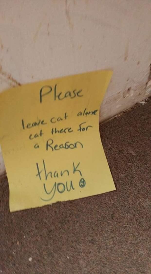 «Кота — не спасать! Он сидит тут по важной причине…» Но парень наступил на записку и обнял бедного зверя!