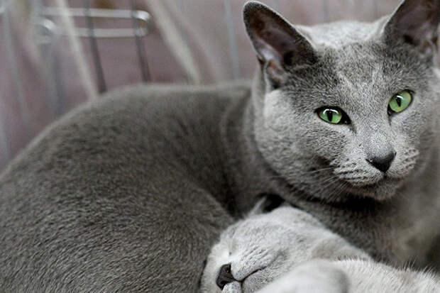 Домашний кот с маяка разбушевался и за год извел на острове весь вид редких птиц