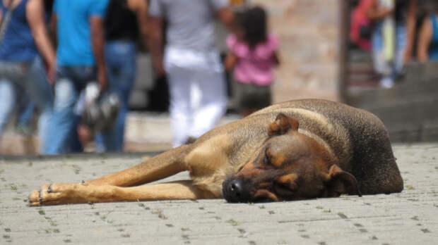 Жители Геленджика заявили о массовом убийстве уличных собак отравой