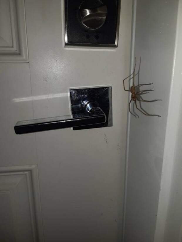 20 фото с огромными пауками, от которых арахнобофы будут в ужасе