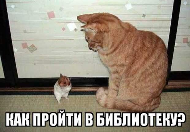 Забавные, позитивные и веселые фотографии про котиков и кошечек для улыбки