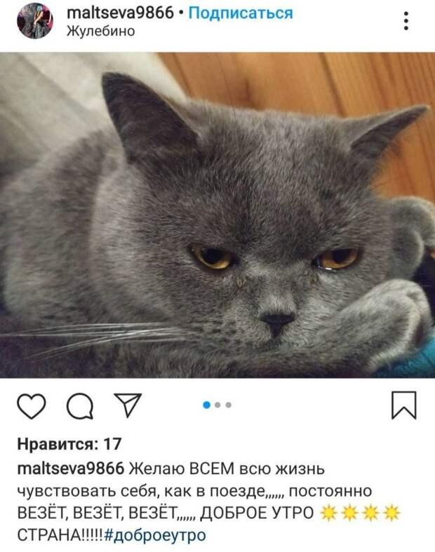 Фото дня: грустный котик из Выхина-Жулебина