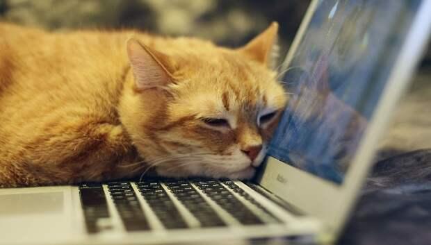 Жители Подольска смогут получить онлайн‑консультацию у ветеринаров