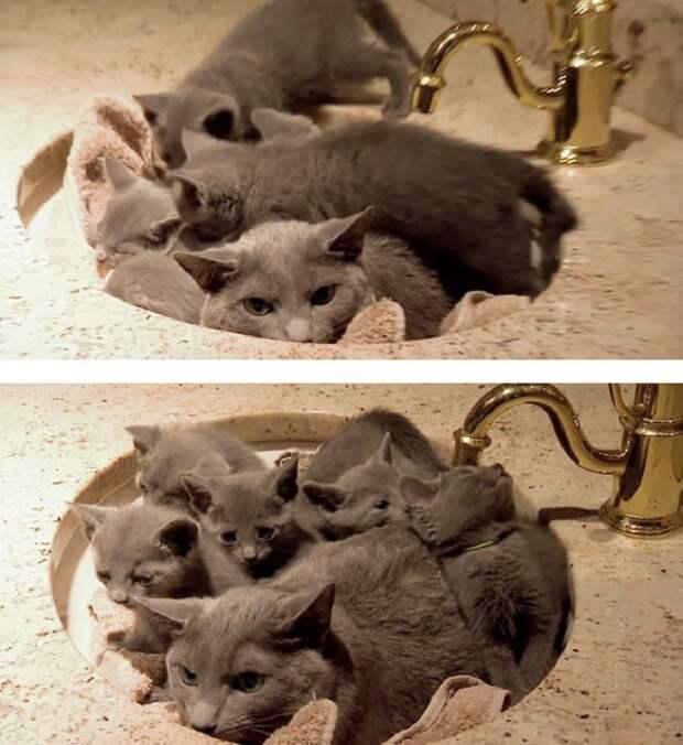Замечательная кошка со своими котятками.