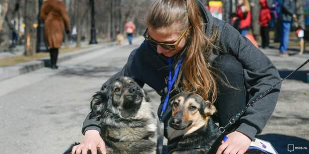 В сквере по Олонецкому проезду приют «Искра» проведет благотворительную акцию