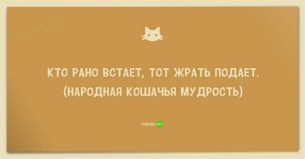 25 смешных анекдотов про кошек и котов анекдот, животные, юмор