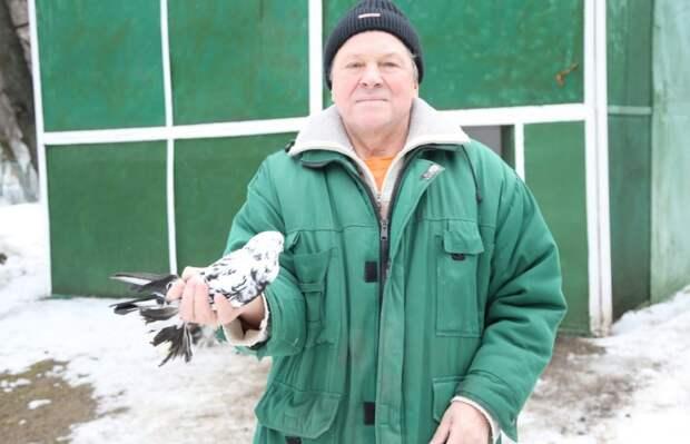 Спасённый в Лианозове голубь окреп и стал настоящим красавцем