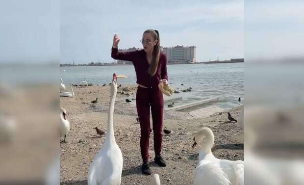 Накормившую хлебом евпаторийских лебедей Бузову обвинили в ожирении птиц