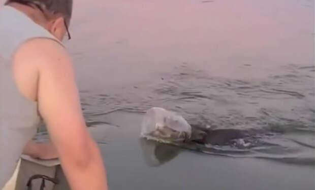 Медведь с банкой на голове приплыл к людям на середину озера, чтобы они помогли ее снять. Видео