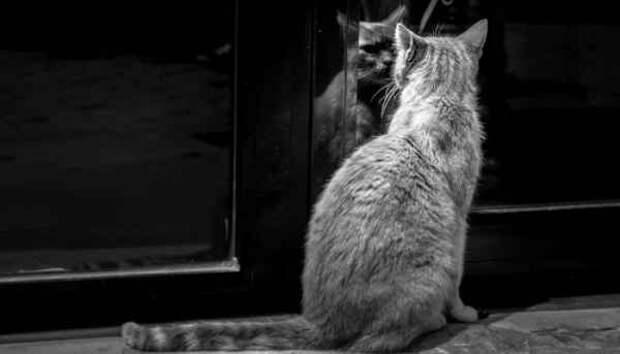 Бабушкин шкаф: реальная история о странных событиях в квартире, доставшейся нам по наследству