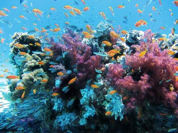 Кораллы любят целоваться.