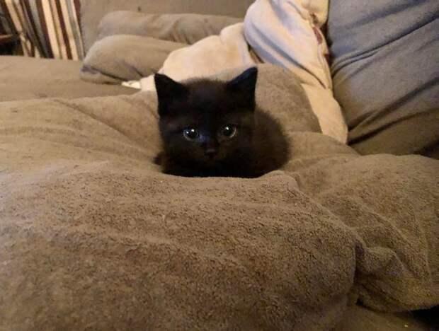20 крошечных котят, про которых ласково говорят «ладошечные»