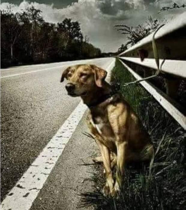 История собаки, которую привязали на дороге к отбойнику истории, собаки, спасение