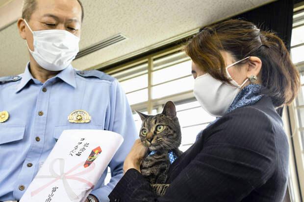 Кошку назначили главой полицейского управления в Японии