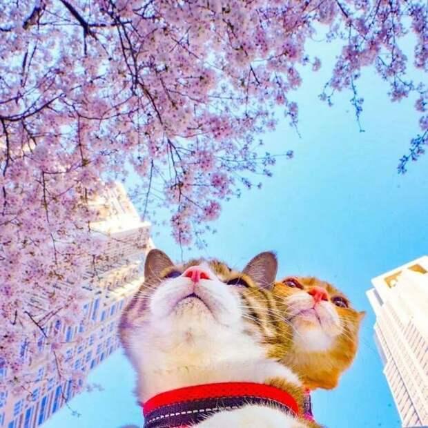 Слышали ли вы о том, что кошки любят путешествовать? То, что они любят вкусно поесть и хорошо поспать мы знаем, но вот чтобы они с большой охотой отправлялись в какие-то путешествия слышим впервые в мире, домашний питомец, животные, кошки, люди, природа, путешествие