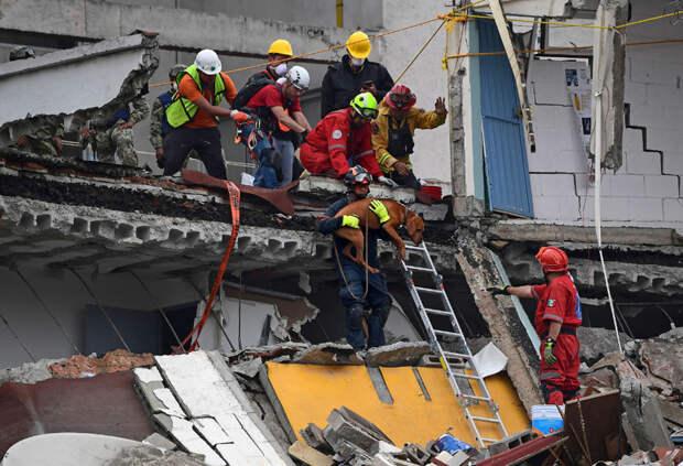 Собачья работа: поиск людей под завалами землетрясение, мексика, собаки поисковики