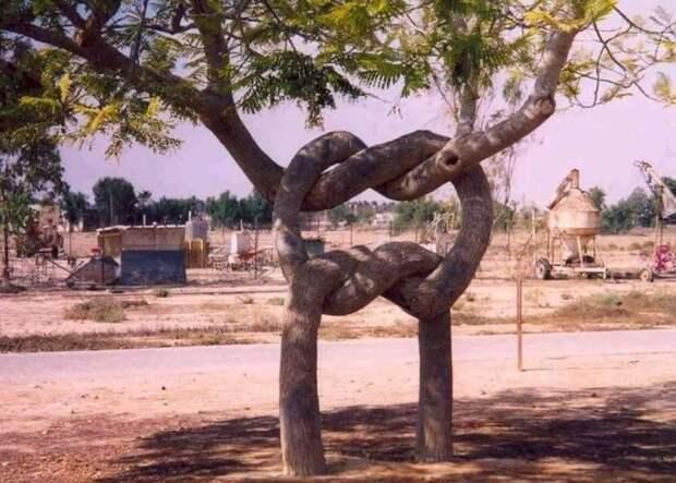 Переплетенные деревья