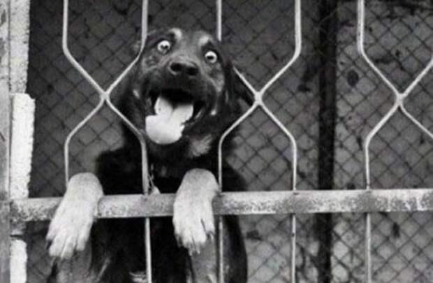 Животные, которые подарят улыбку