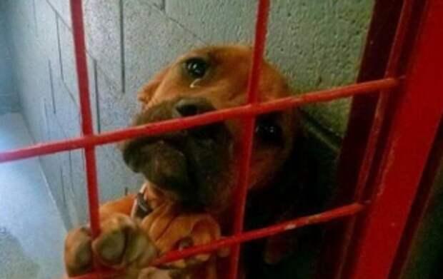 Помните собаку, которая плакала от одиночества в приюте? Она, наконец, обрела дом!