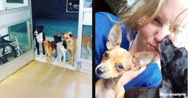 Когда бездомного парня увезла скорая, то все его четыре собаки бежали за машиной