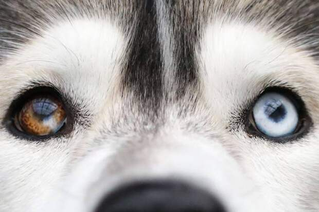 мир глазами собаки