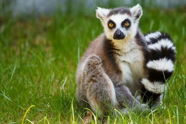 5 животных которые в скором времени могут исчеснуть