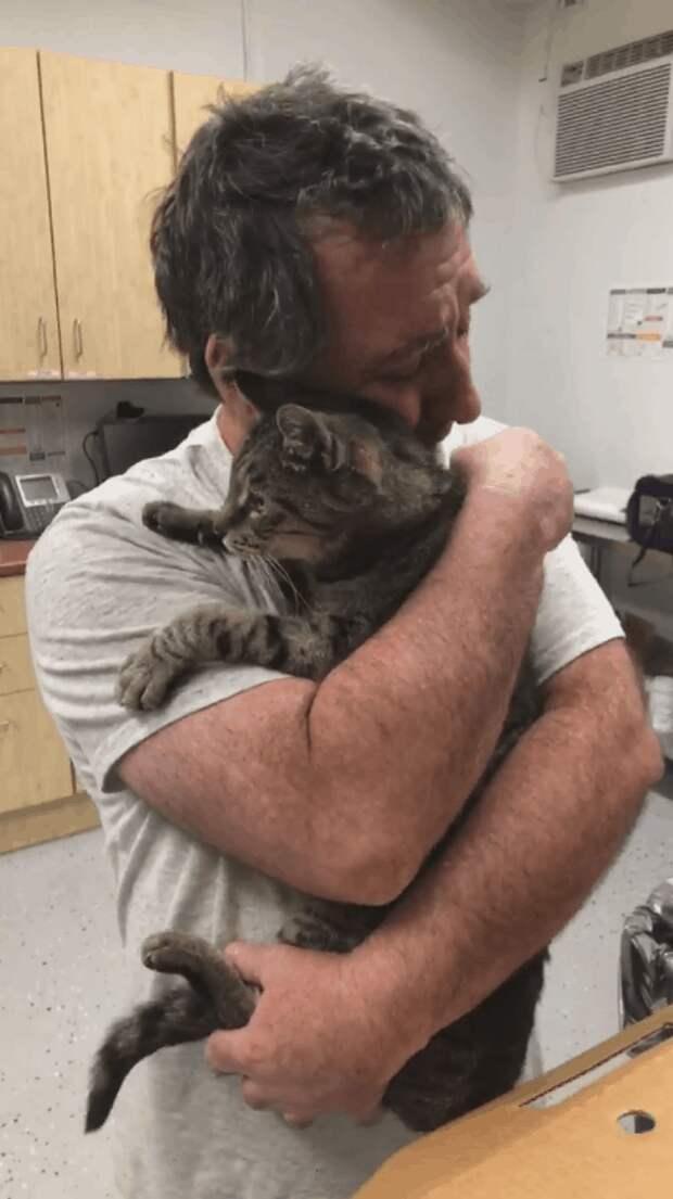 Мужчина год искал своего котика. Они встретились спустя 7 лет, и это очень трогательно