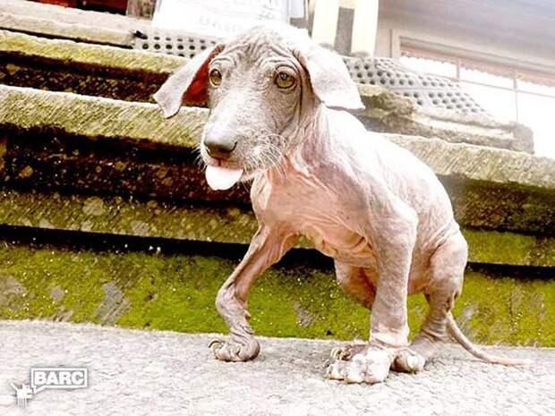 Спасение и невероятное преображение пса Фрэнки, найденного в канаве