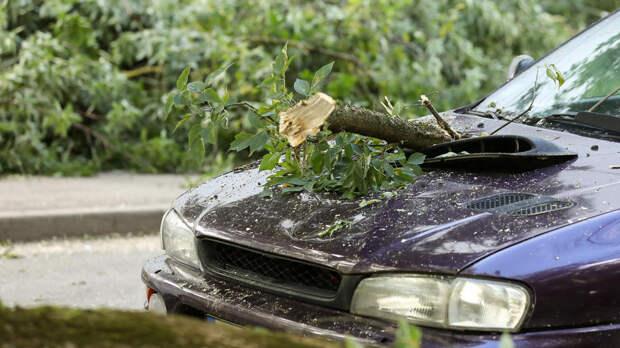 Дерево рухнуло на автомобиль в Москве после благоустройства сквера