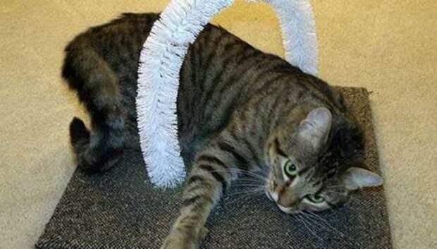 20 лайфхаков для счастливых хозяев кошек