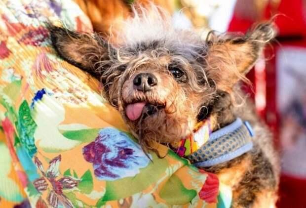 В США пёс по кличке Бродяга признан самым уродливым в мире