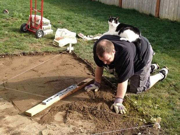 Котики сами не любят работать и вам это сделать не дадут. кот, котики, прикол, юмор
