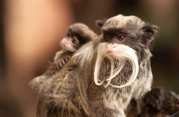 Самые необычные родители в мире животных