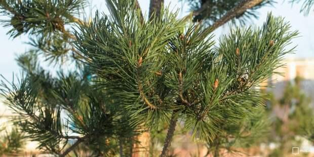 Утилизировать елку можно на Гостиничной и Академика Комарова