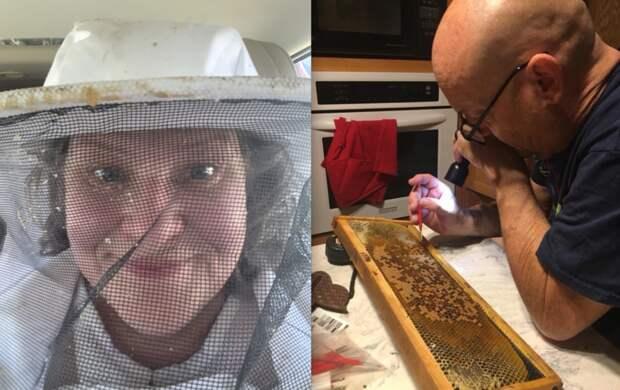 """Пчеловоды очень успешно """"жужжат"""" в TikTok: как стать знаменитостью в социальных сетях"""