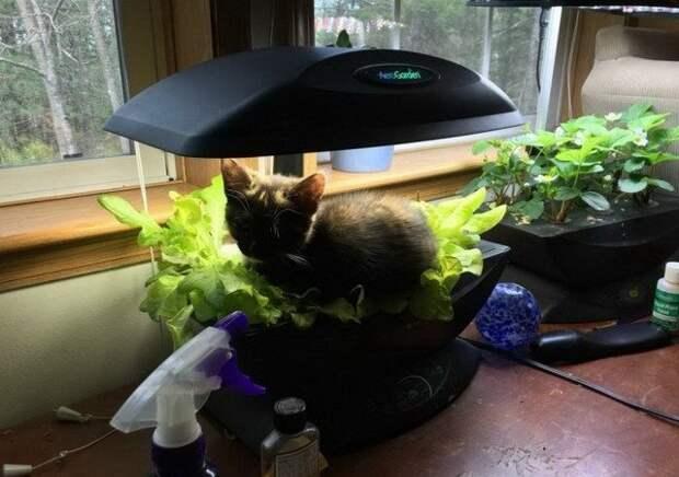 Коты проказники или как умеют отжигать коты!