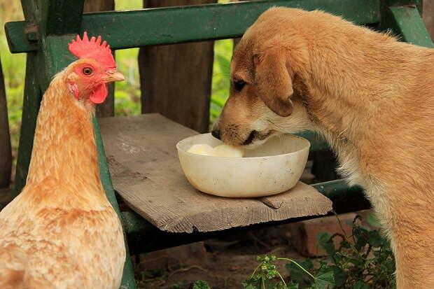 К обеду не звали?