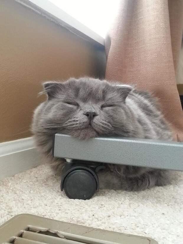 Нет, ты не расстроишь этого пушистика и не сдвинешь кресло с места животные, коты, фото